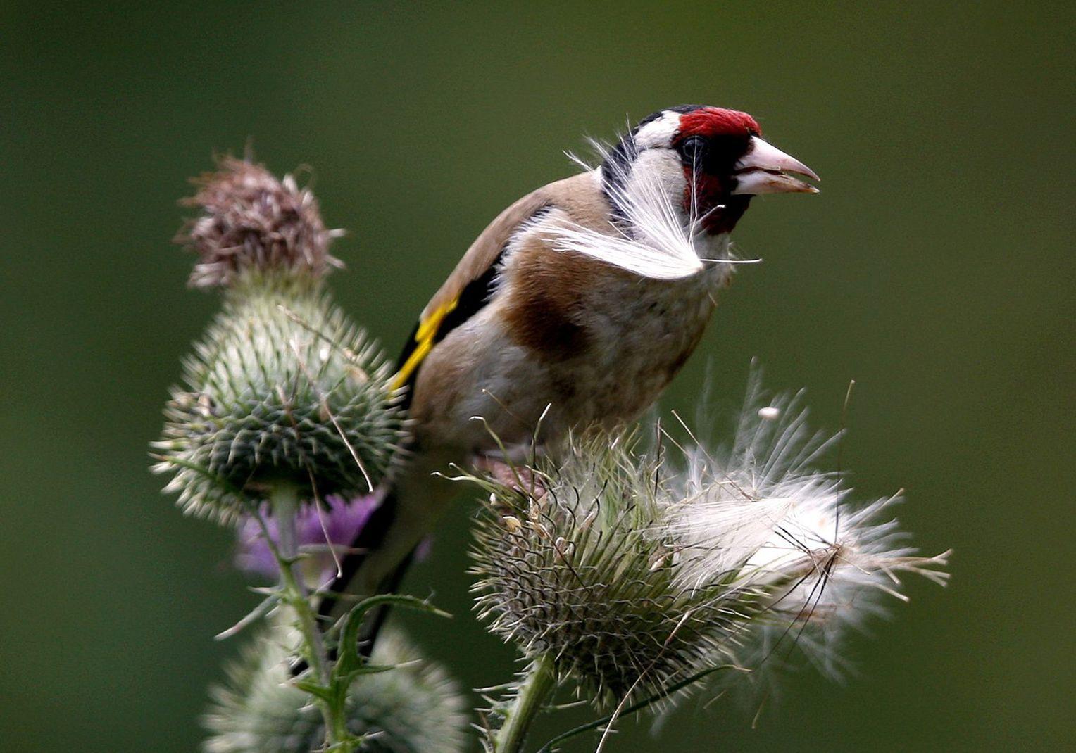 Deutsches Flittchen lässt sich im Garten vögeln