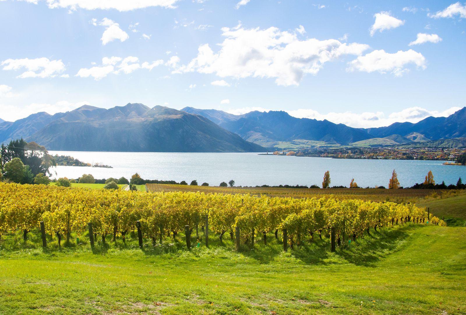 EINMALIGE VERWENDUNG Neuseeland/ Wein