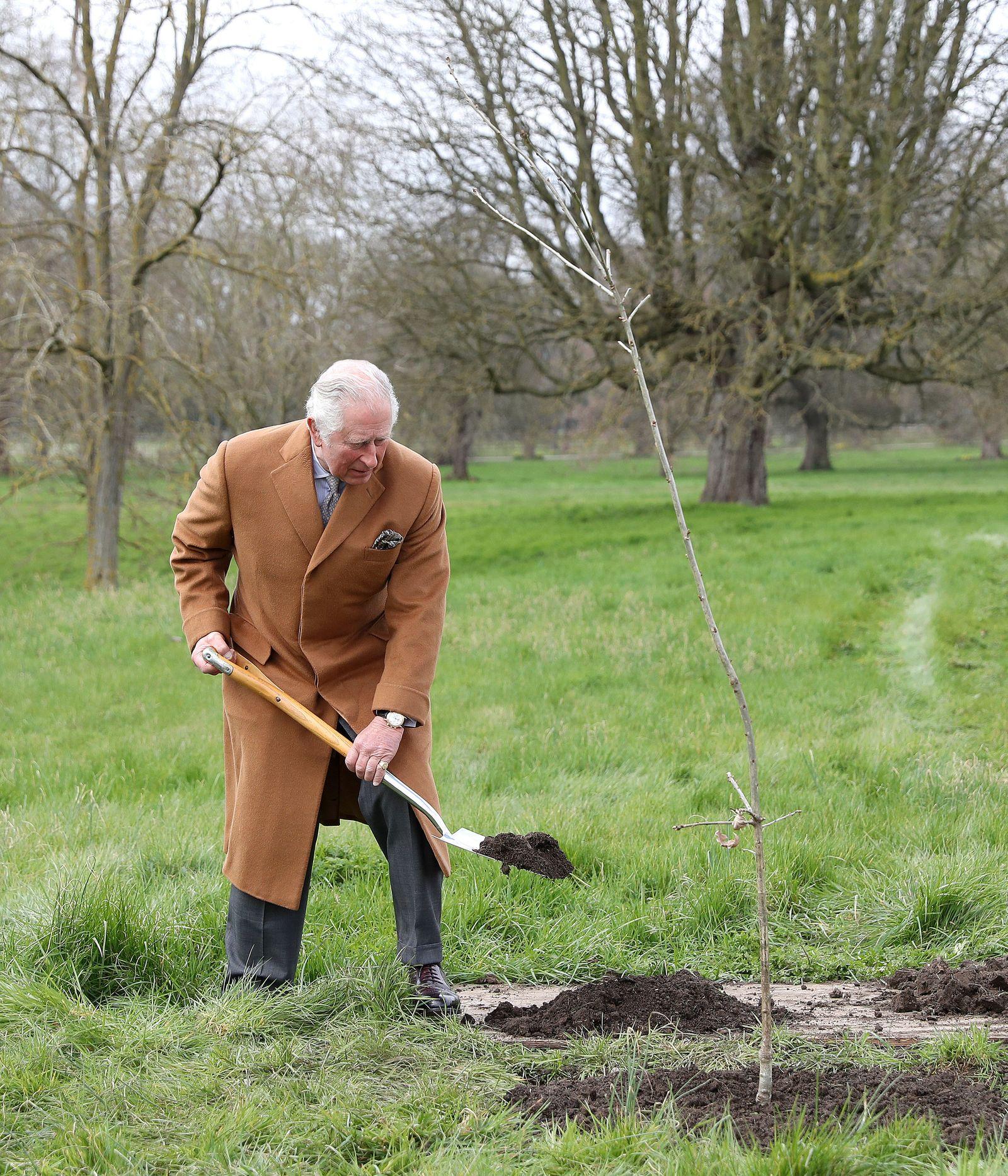 «Grüner Baldachin»: Bäumepflanzen vor Queen-Jubiläum