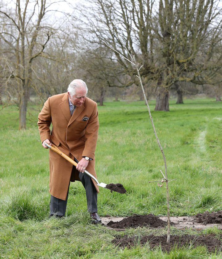 Prinz Charles setzte selbst die Schaufel an und gräbt einen Baum ein