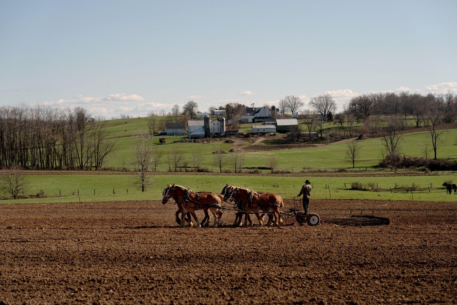An Amish man plows a field in Fredericksburg, Ohio, April 2, 2020. (Erin Schaff/The New York Times)