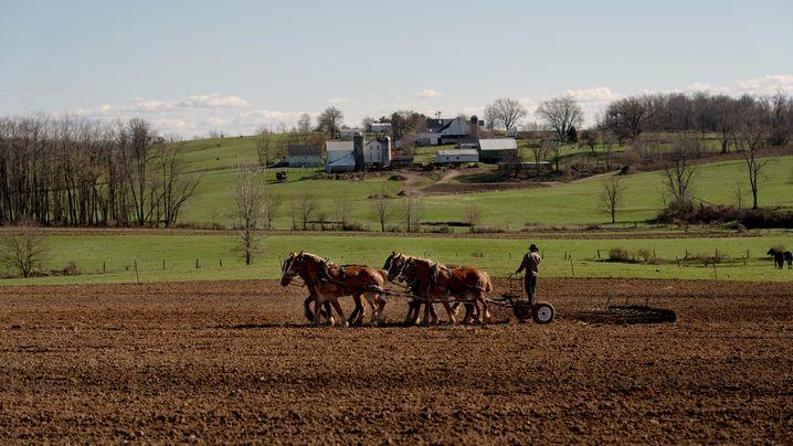 "Die Amish und Corona: ""Operation Stop Covid-19"""
