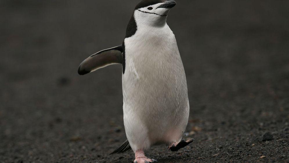 Antarktis: Die Pinguine von Deception Island