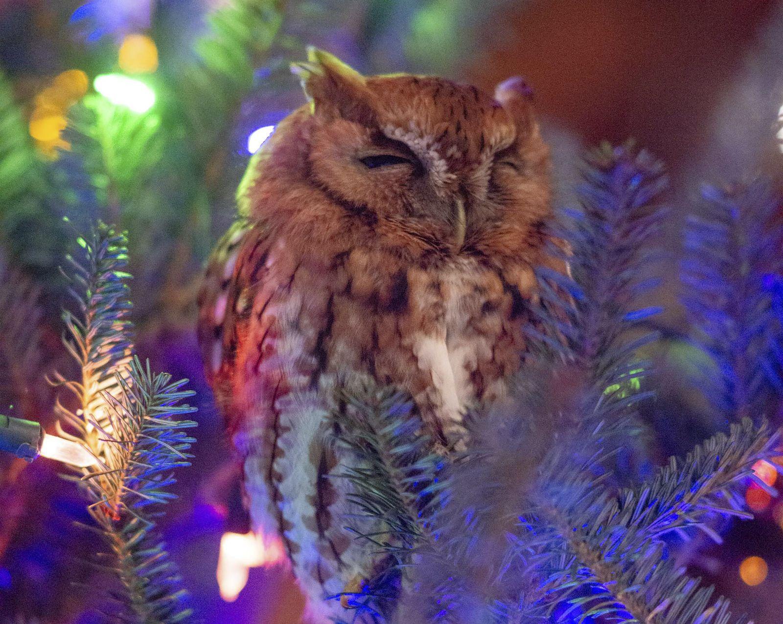 Eule/ Tannenbaum/ Christmas tree/ Atlanta