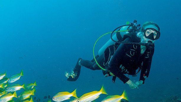 Oceans 2050 Cousteaus 2019 gegründete Organisation zur Rettung der Weltmeere, oceans2050.com