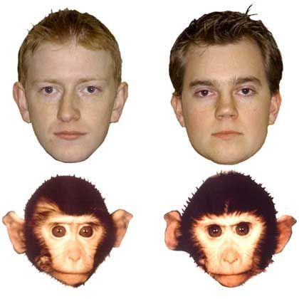 Testabbildungen von Gesichtern: Ausblendung artfremder Züge