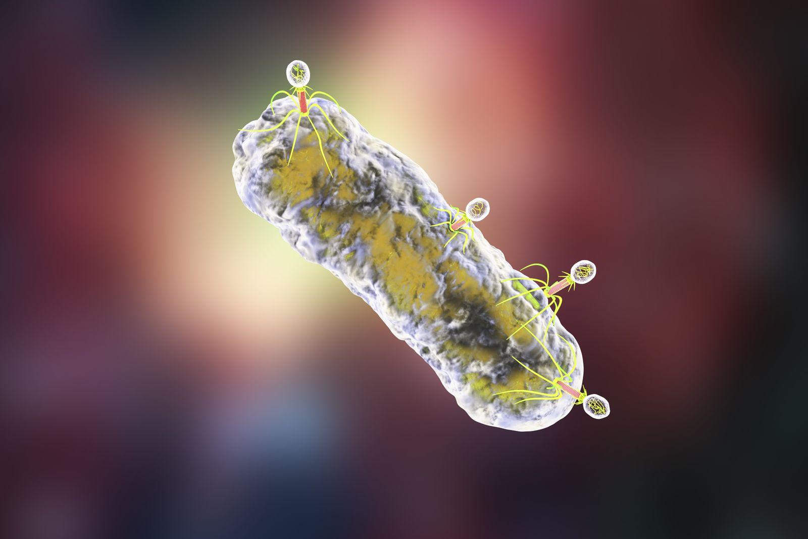 EINMALIGE VERWENDUNG Bakteriophage
