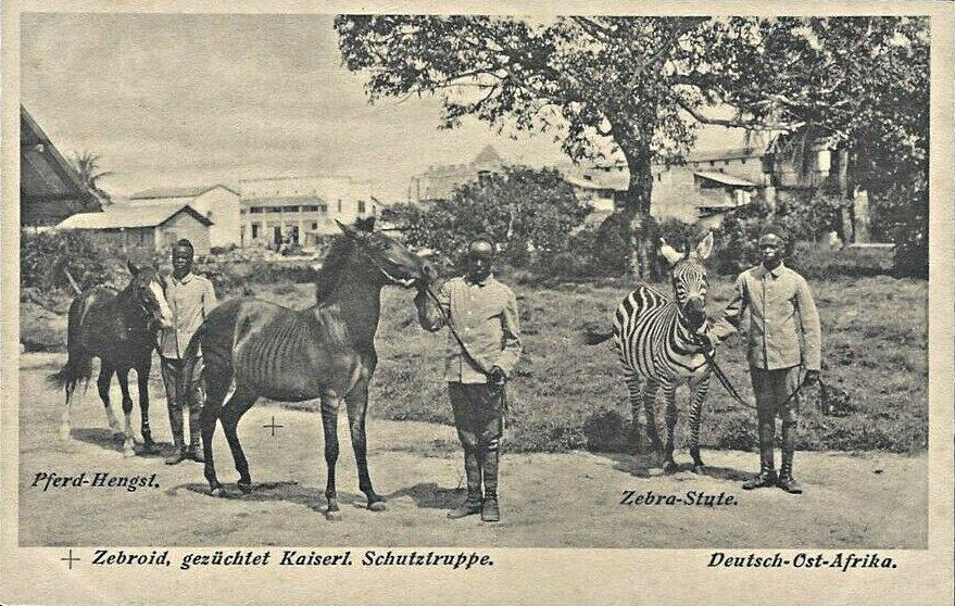 Hybrid Pferd und Zebra