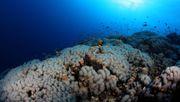 Rohstoffrausch in der Tiefsee