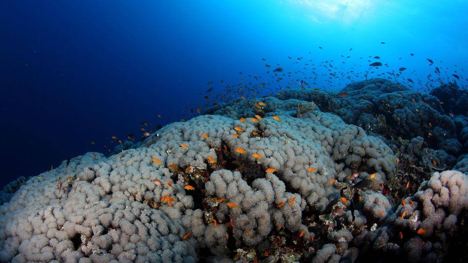 Korallenriff: Juristischer Wilder Westen