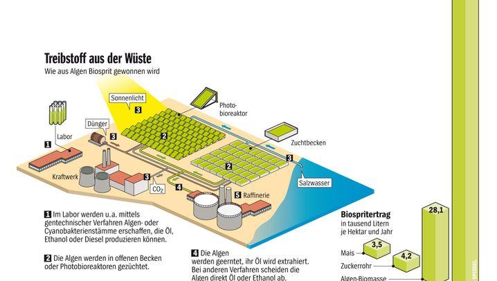 Energie: Biosprit aus Algen