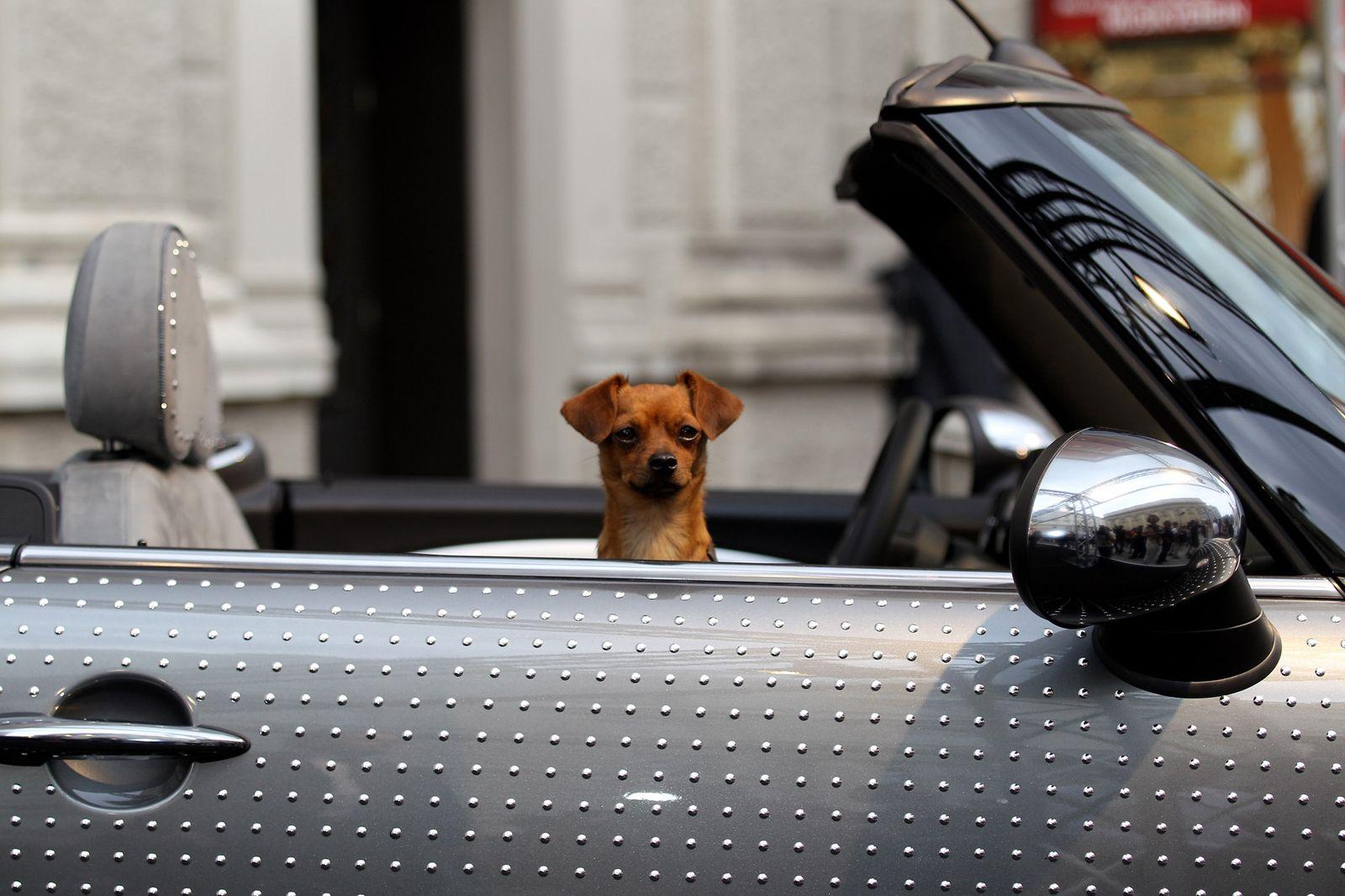Hund / Auto / Symbol