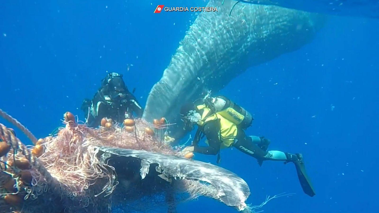 Italian Coast Guard divers free whale caught in fishing net off Lipari coast