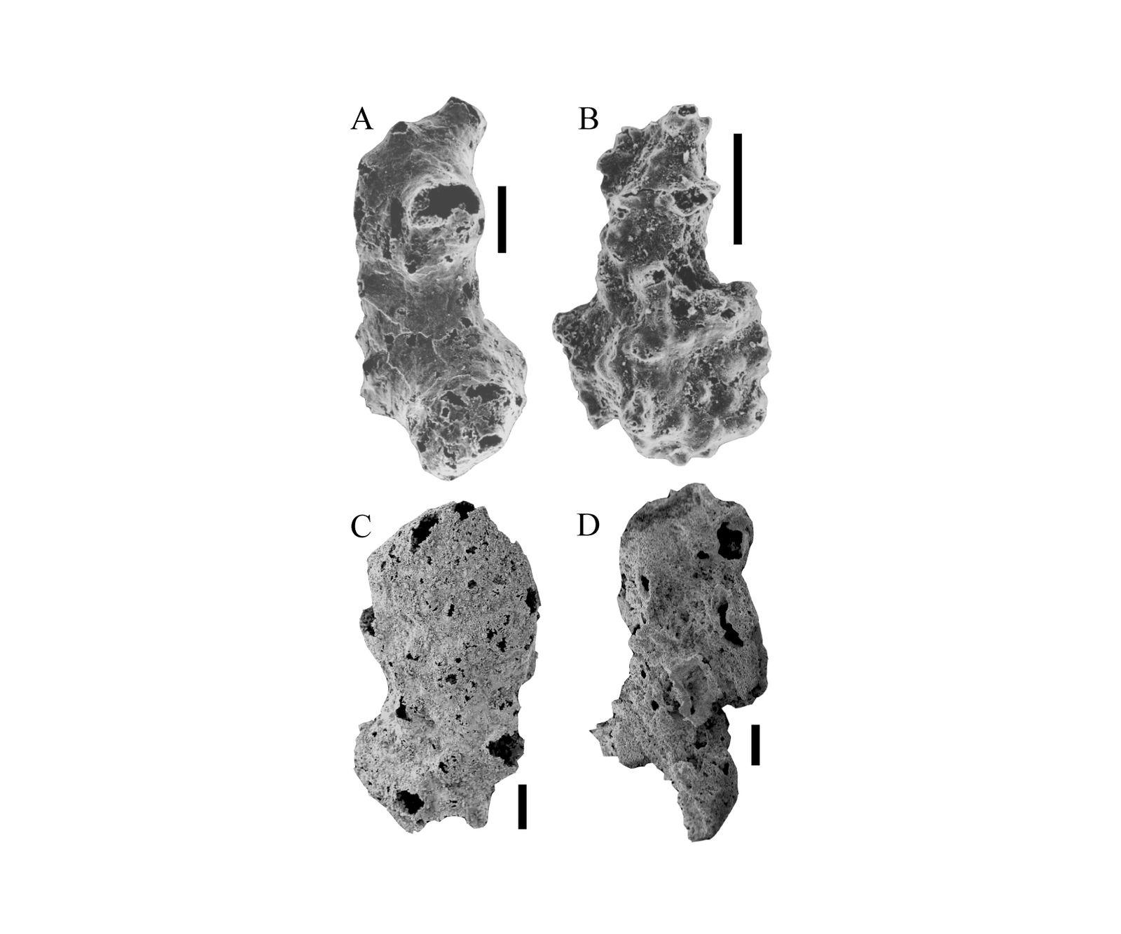 EINMALIGE VERWENDUNG Ältestes Fossil / Namibia / WISSENSCHAFT