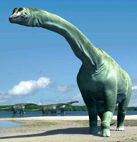 Paralititan stromeri: Nach der Größe seiner Knochen einer der größten Sauropoden aller Zeiten