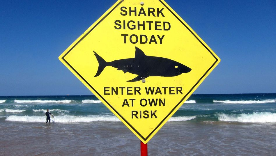 Australien: Hai tötet Parkmitarbeiter im Great Barrier Reef