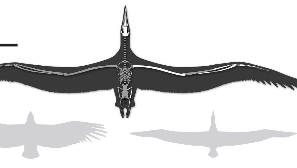 Rekordvögel: Die größten Flieger aller Zeiten