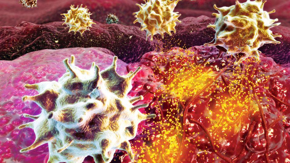 T-Zellen bei der Arbeit (künstlerische Darstellung): Genmanipulierte Immunzellen erkennen Krebszellen als feindlich