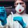Die Mär vom unzuverlässigen PCR-Test