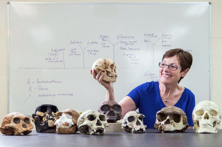 Familientreffen: Studienleiterin Debbie Argue mit Schädeln von Homo floresiensis (in ihrer Hand) und verschiedener menschlicher Arten