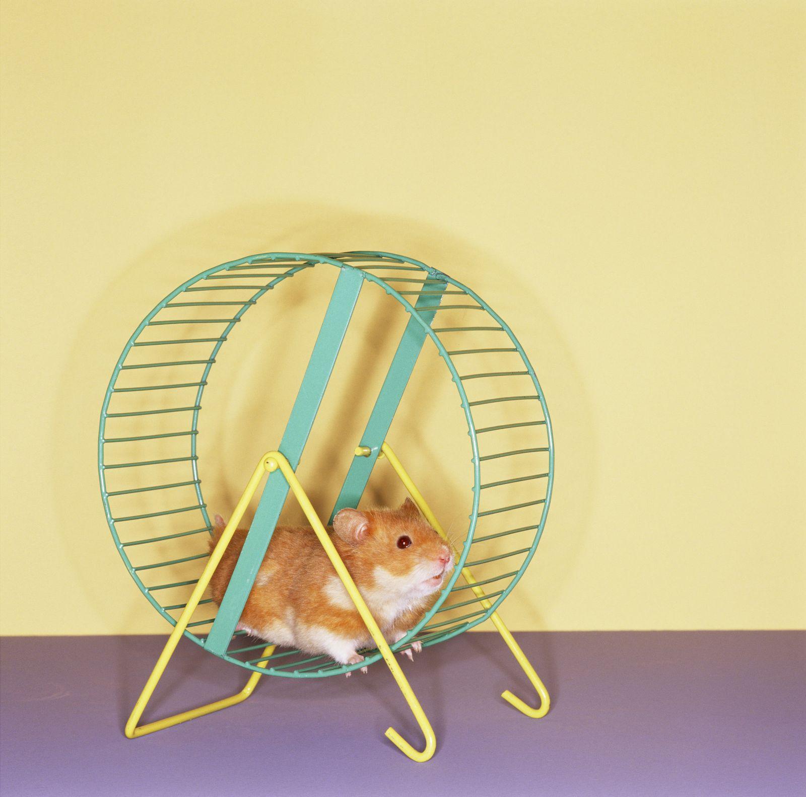 NICHT MEHR VERWENDEN! - Hamsterrad