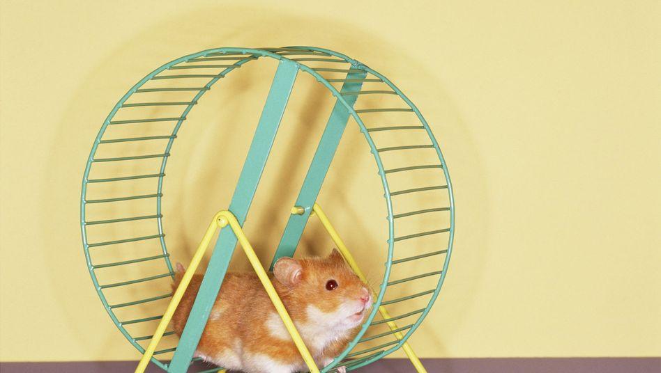 Hamsterrad: Der Witz daran ist, dass es nicht schneller vorangeht, wenn man schneller rennt