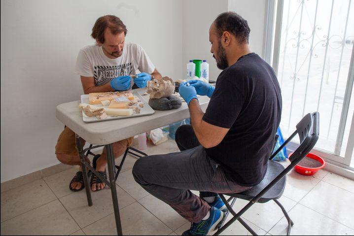 Nicolaus Seefeld und der Anthropologe Ricardo Ruiz bei der Restaurierung eines Schädels