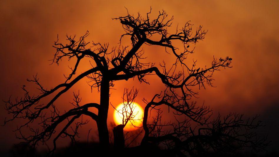 """Brasilien: """"Wir müssen die Beziehung zwischen Menschen und Wäldern stärken"""""""
