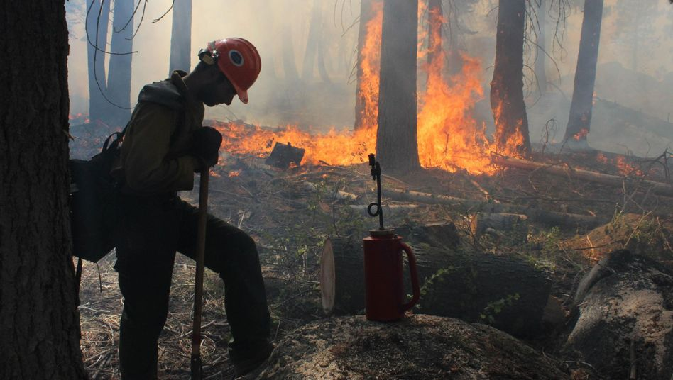 Die Feuerwehr kämpft gegen die Flammen an: 80 Prozent sind unter Kontrolle