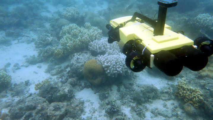 Gefährliche Seesterne: Tödliche Injektion aus dem Roboter
