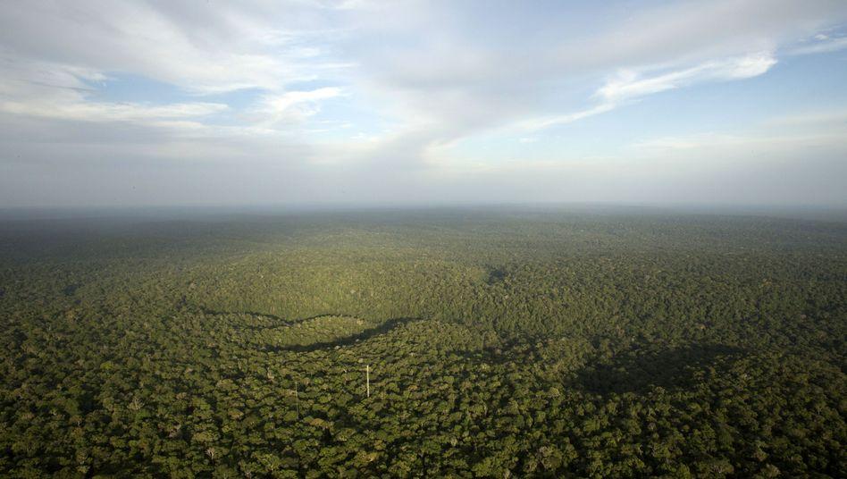 Blick vom Amazon Tall Tower Observatory (ATTO) in Sao Sebastiao do Uatuma