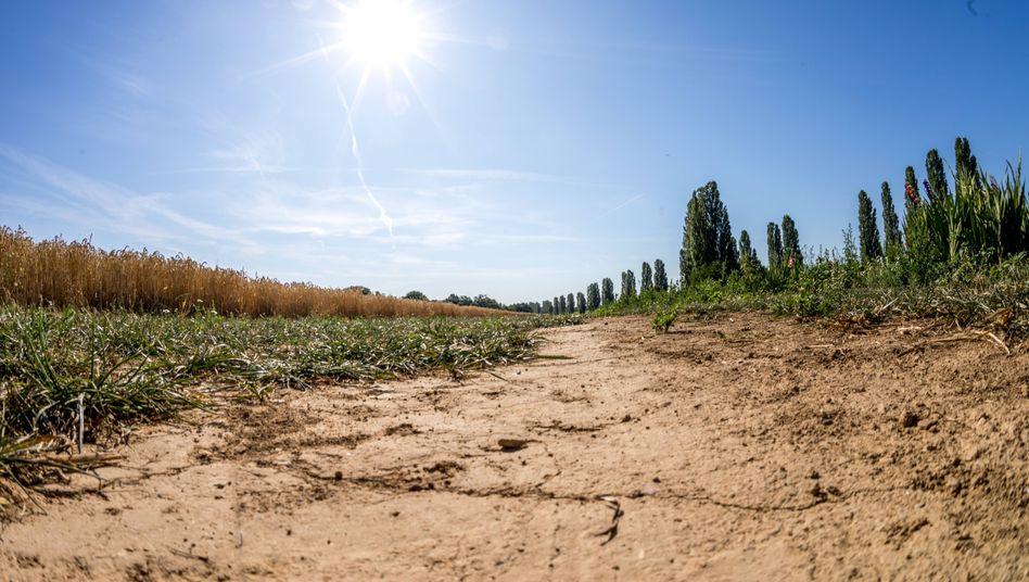 """Trockene Äcker in Oberursel (Hessen): """"Damit ist eine Zuschreibung zum Klimawandel gegeben"""""""