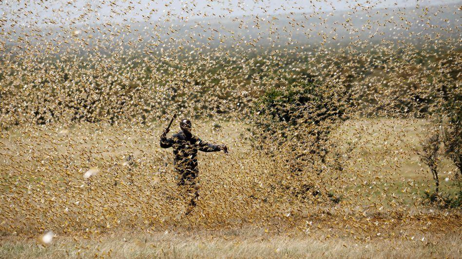 Machtlos im Angesicht des Schwarms: Ein Bauer in Kenia