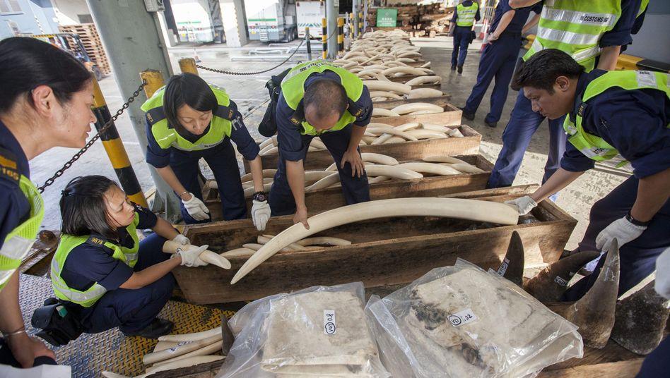 Beschlagnahmtes Elfenbein (Hongkong, August 2013): Schmuggel soll härter geahndet werden