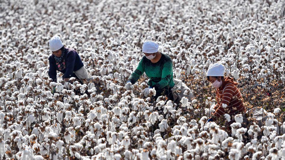 Baumwollernte in Xinjiang: »Die Hinhaltetaktik der Textilindustrie stößt an ihre Grenzen«