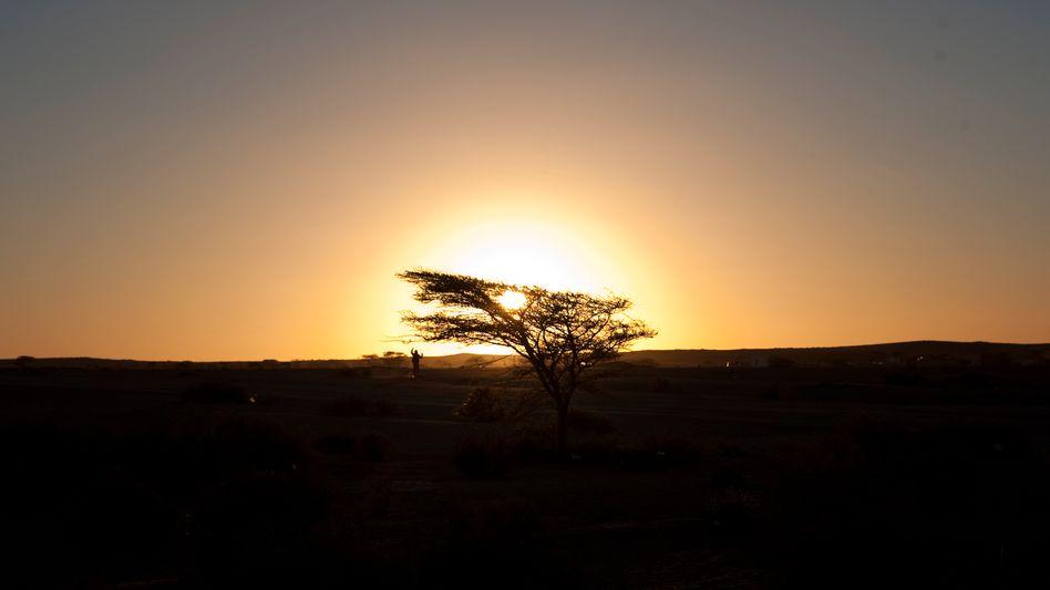 Europe hopes to harness the Saharan sun.