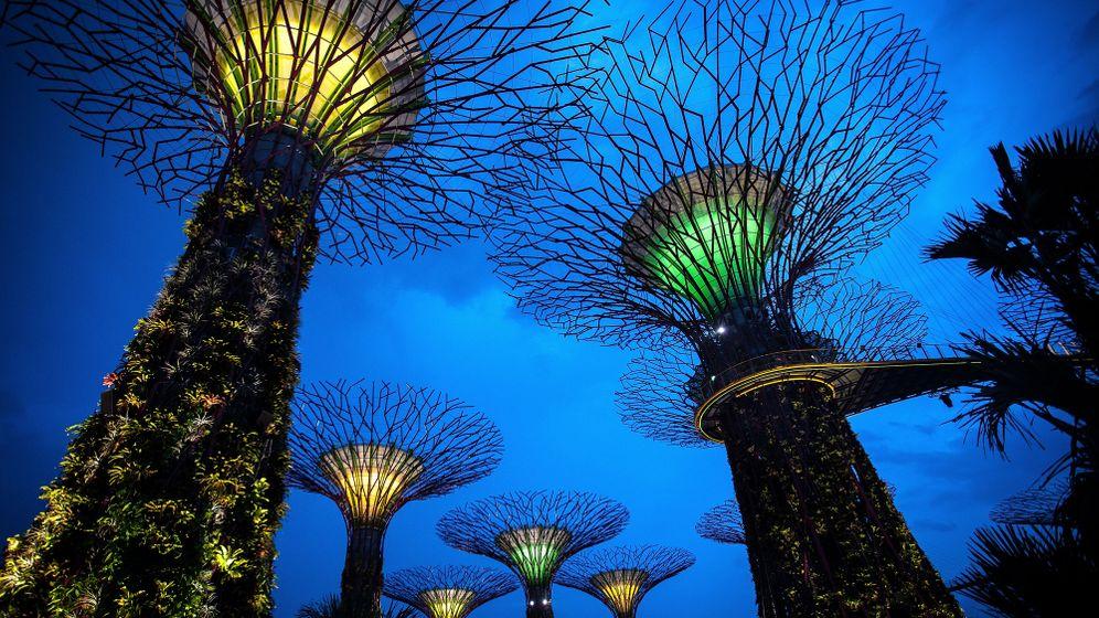 Park in Singapur: Wandeln im Stahlwald