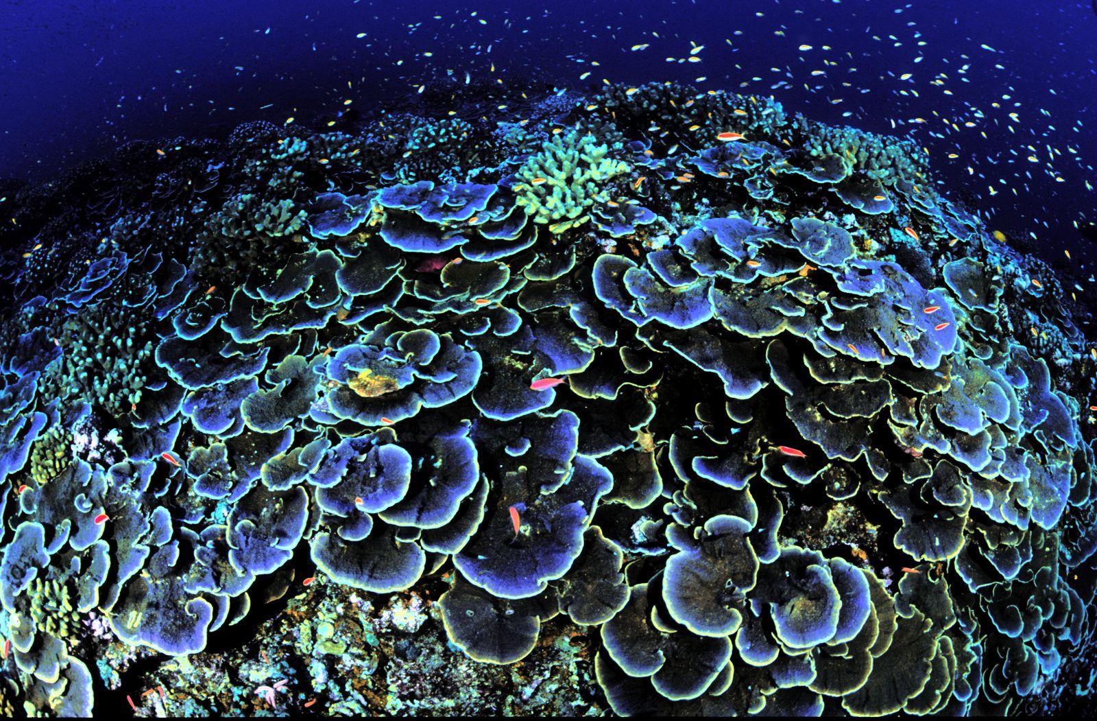 Bush Marine Conservation