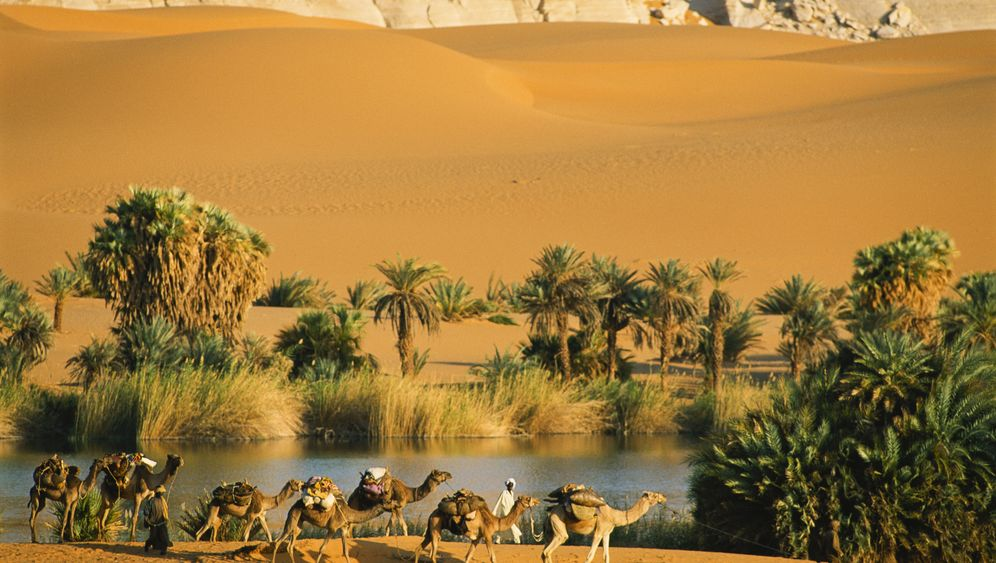 Photo Gallery: Paradise in the Middle of the Sahara