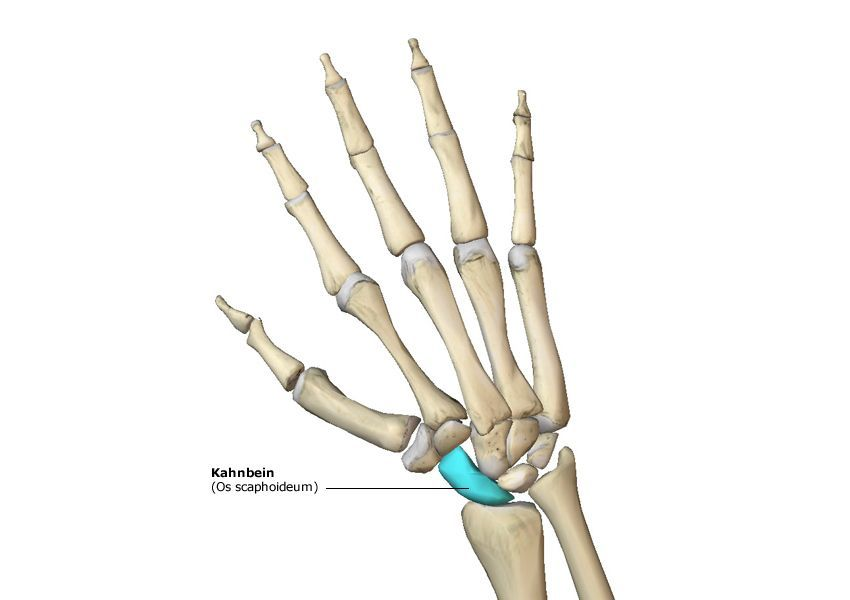 Grafik - Handknochen/Kahnbein