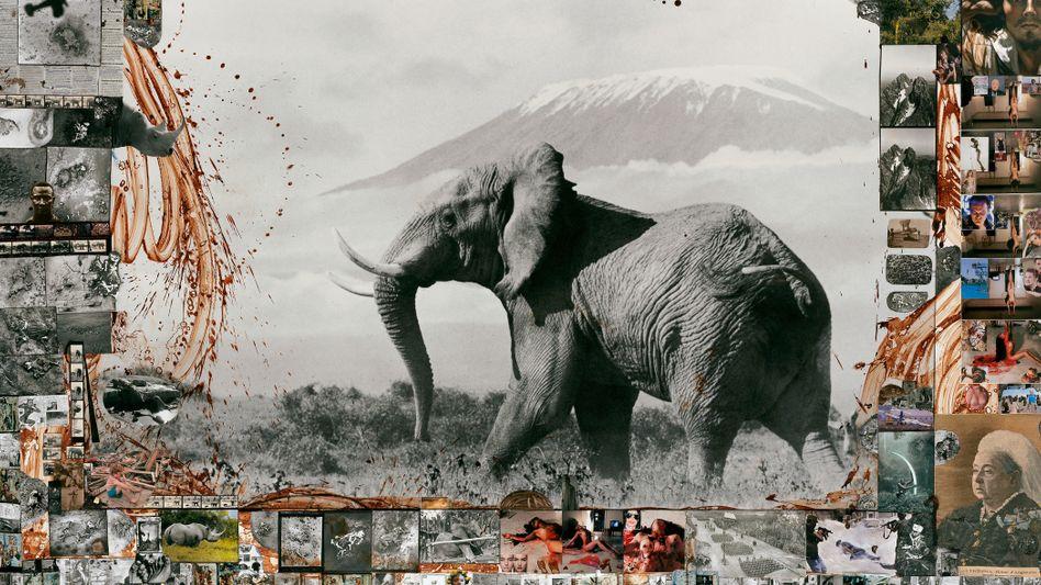 Heimlich fing Beard mit seiner Kamera das Massensterben der Elefanten im Tsavo-Nationalpark in Kenia ein