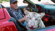 König der Tiger