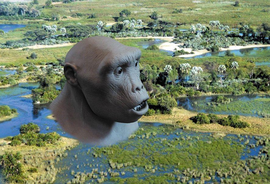 Homo Sapiens / Botswana / Menschenaffe