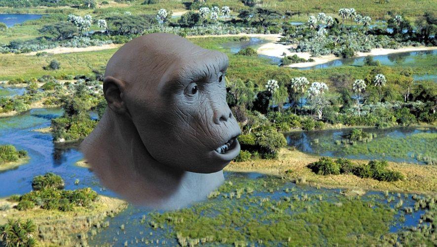 Toumai-Fossil eines Frühmenschen (Nachbildung): Überraschungen im Erbgut