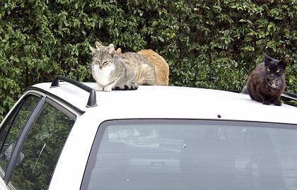 Katze auf dem Blechdach: Höchstens oberflächliche Kratzer