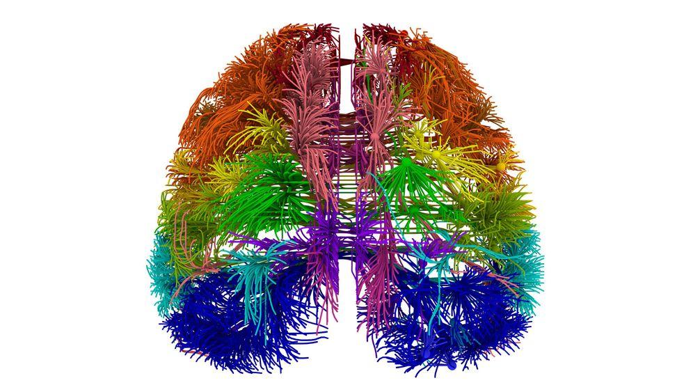 Gehirnatlas: So entwickeln sich die Nervenzellen von Mensch und Maus