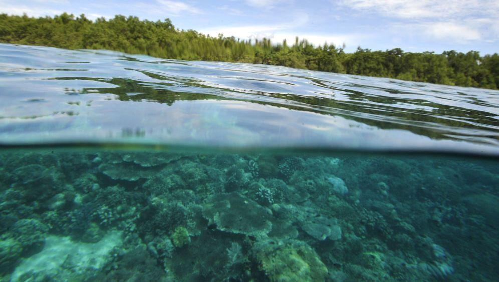 Ipso-Bericht: Weltmeere vor dem Kollaps
