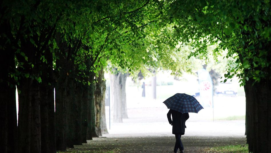 Mann auf einer Allee: Jeder fünfte Deutsche lebt allein