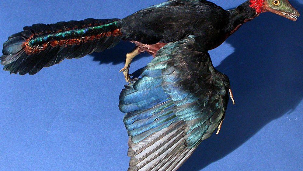 Archaeopteryx: Flattern statt fliegen