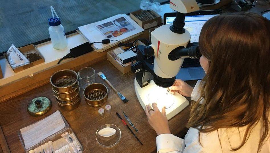 Archäobotanikerin bei der Analyse